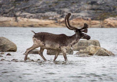Arctic Adventures - Tunulik