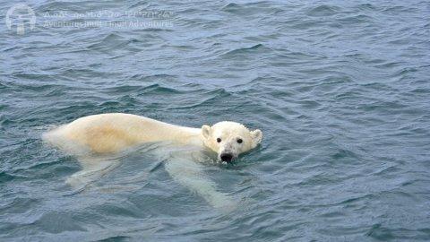 Inuit Adventures