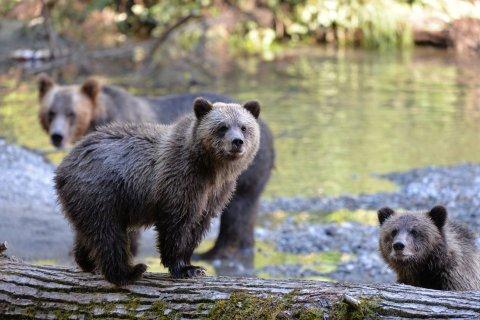 Homalco Wildlife Tours